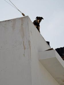 hund dog ierapetra crete kreta roof tak